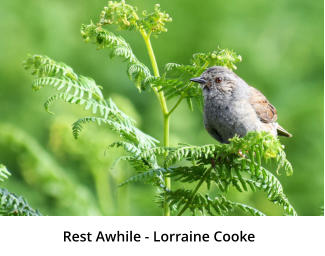 Rest Awhile - Lorraine Cooke