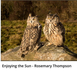 Enjoying the Sun - Rosemary Thompson